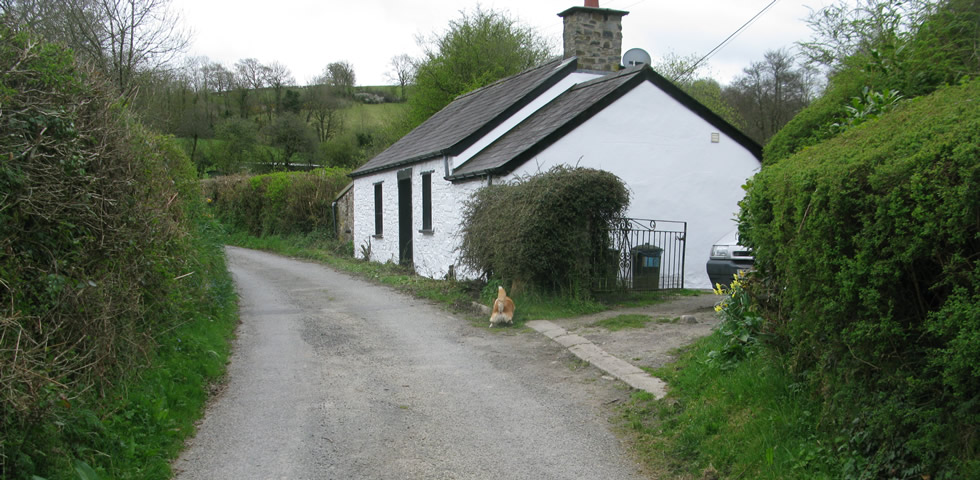 view of Typoeth Cottage - white washed cottage