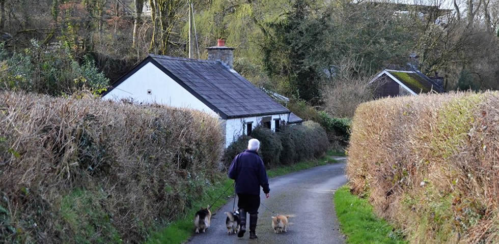 Walking the dogs down the lane